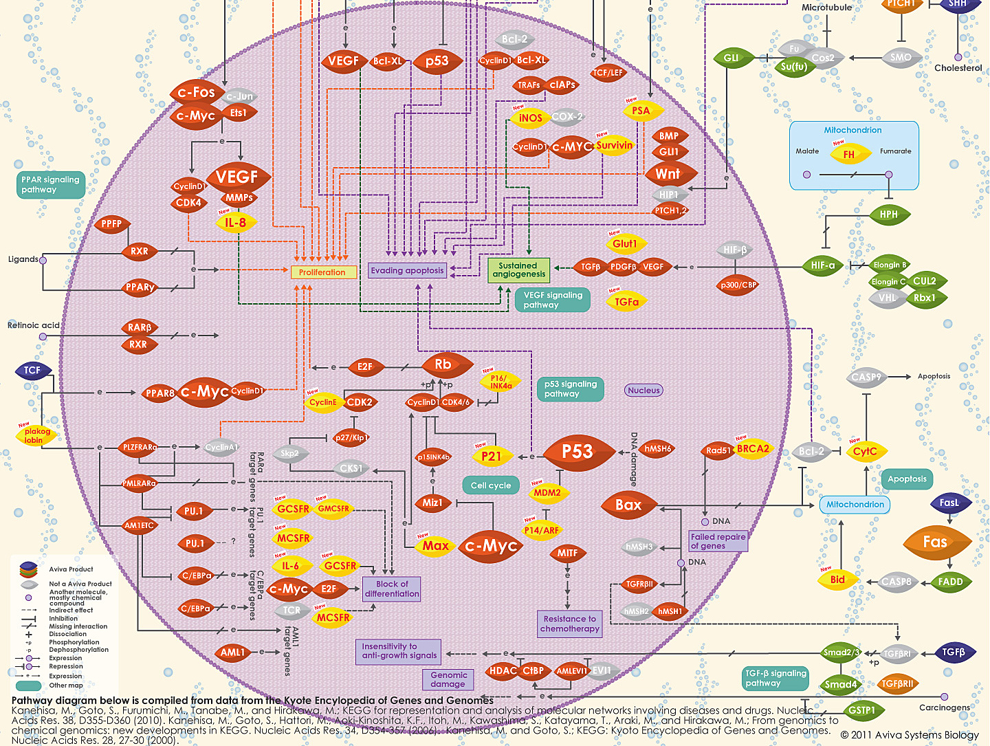 Pathways in Cancer image by Aviva System Biology bottom