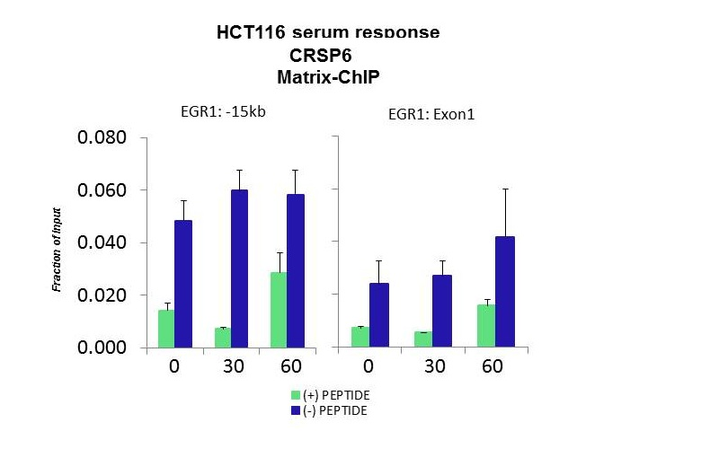 CRSP6 antibody - N-terminal region (ARP34192_P050) in HCT116 using CHIP
