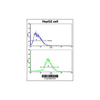 CDH13 antibody - N-terminal region (OAAB01183) in HepG2 cells using Immunohistochemistry