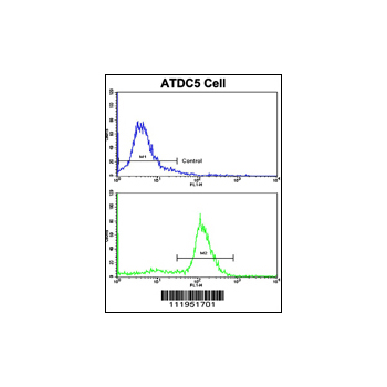 ALDH5A1 antibody - N-terminal region (OAAB01221) in ATDC5 cells using Immunohistochemistry