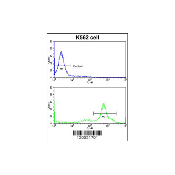 CCT3 antibody - center region (OAAB01653) in K562 cells using Flow Cytometry