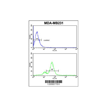 AHSA1 antibody - N-terminal region (OAAB01656) in MDA-MB231 cells using Flow Cytometry