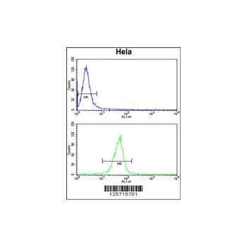 CLEC2B antibody - center region (OAAB02188) in Hela cells using Flow Cytometry