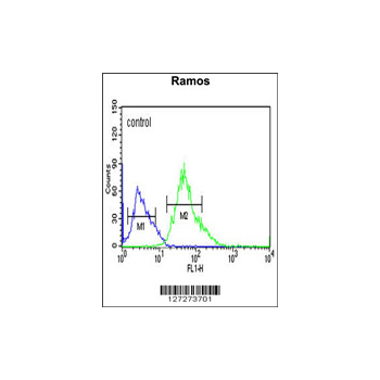 CORO6 antibody - center region (OAAB02247) in Ramos cells using Flow Cytometry