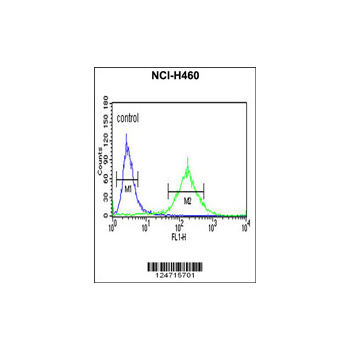 BBS10 antibody - C-terminal region (OAAB02296) in NCI-H460 cells using Flow Cytometry