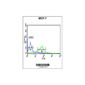 CENPN Antibody (OAAB02327) in MCF-7 cells using Flow Cytometry