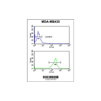 ADM Antibody (OAAB02420) in MDA-MB435 cells using Flow Cytometry
