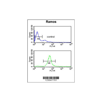 B3GALT6 Antibody (OAAB02425) in Ramos cells using Flow Cytometry