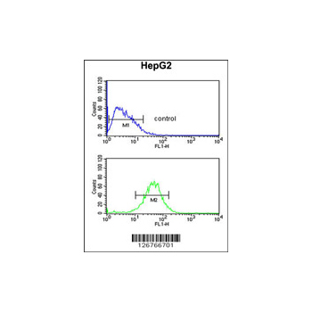 ACTL6B antibody - N-terminal region (OAAB02744) in HepG2 cells using Flow Cytometry