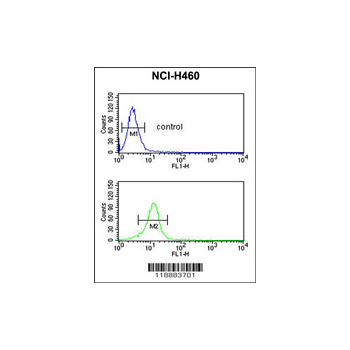 BLNK antibody - center region (OAAB03485) in NCI-H460 cells using Flow Cytometry