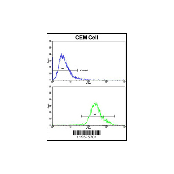 CNOT8 antibody - C-terminal region (OAAB03512) in CEM cells using Flow Cytometry
