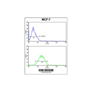 CSN1S1 antibody - center region (OAAB03556) in MCF-7 cells using Flow Cytometry