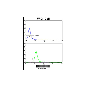 CTDP1 antibody - N-terminal region (OAAB03666) in WiDr cells using Flow Cytometry