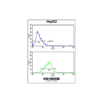 AOX1 antibody - center region (OAAB03759) in HepG2 cells using Flow Cytometry