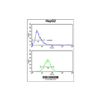 AMT antibody - N-terminal region (OAAB03813) in HepG2 cells using Flow Cytometry