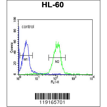 APOL4 antibody - center region (OAAB03874) in HL-60 cells using Flow Cytometry