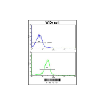 AADAC antibody - C-terminal region (OAAB03900) in WiDr cells using Flow Cytometry