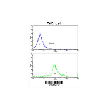 ASS1 antibody - center region (OAAB03928) in WiDr cells using Flow Cytometry