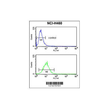 CDC42 antibody - center region (OAAB04050) in NCI-H460 cells using Flow Cytometry