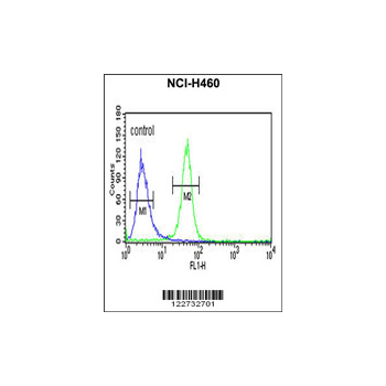 AKT2 Antibody (OAAB04130) in NCI-H460 cells using Flow Cytometry