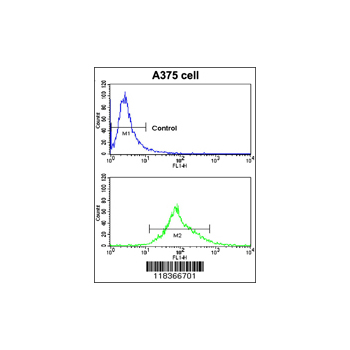 CA14 antibody - N-terminal region (OAAB04288) in A375 cells using Flow Cytometry