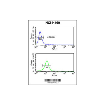 COL5A2 antibody - N-terminal region (OAAB04364) in NCI-H460 cells using Flow Cytometry
