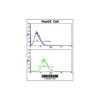 CYP2J2 antibody - N-terminal region (OAAB04481) in HepG2 cells using Flow Cytometry