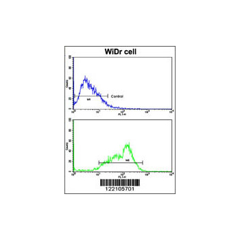 BCL2L11 antibody - center region (OAAB05145) in WiDr cells using Flow Cytometry