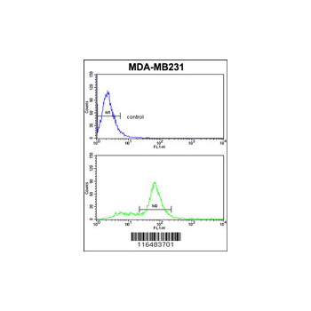 CAV2 antibody - N-terminal region (OAAB05238) in MDA-MB231 cells using Flow Cytometry