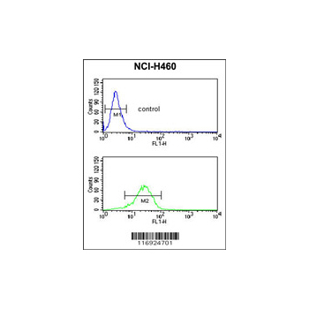 CYP11B1 antibody - N-terminal region (OAAB05320) in NCI-H460 cells using Flow Cytometry
