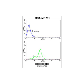 CYP11B1 antibody - C-terminal region (OAAB05321) in MDA-MB231 cells using Flow Cytometry