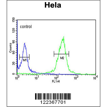 CLIP1 antibody - N-terminal region (OAAB05546) in Hela cells using Flow Cytometry