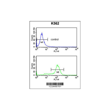 CDK5RAP1 antibody - C-terminal region (OAAB05622) in K562 cells using Flow Cytometry