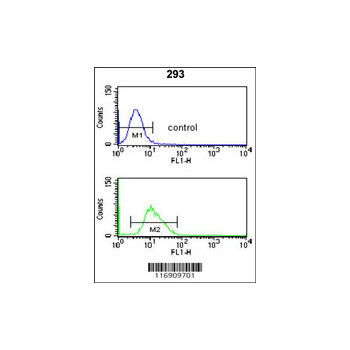 CDC14B antibody - center region (OAAB05669) in 293 cells using Flow Cytometry