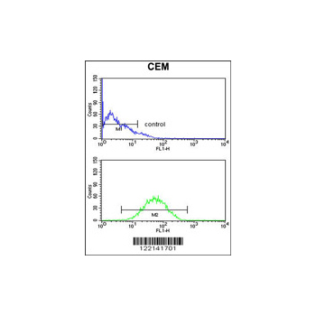 CNDP1 antibody - C-terminal region (OAAB05757) in CEM cells using Flow Cytometry