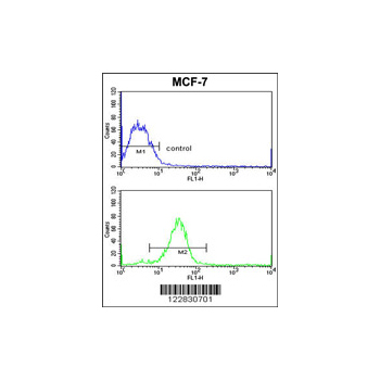 ADCY7 antibody - center region (OAAB05981) in MCF-7 cells using Flow Cytometry