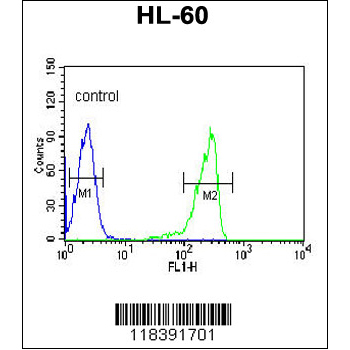 CAPN3 antibody - C-terminal region (OAAB06418) in HL-60 cells using Flow Cytometry