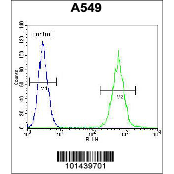 ACTA1 antibody (Ascites) (OAAB06895) in A549 cells using Flow Cytometry