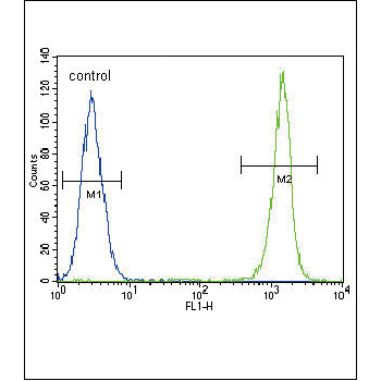 ACTA1 antibody (OAAB06896) in A549 cells using Flow Cytometry