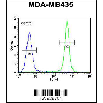 ALKBH6 antibody - center region (OAAB07529) in MDA-MB435 cells using Flow Cytometry