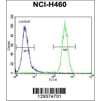 CCDC63 antibody - C - terminal region (OAAB07750) in NCI-H460 cells using Flow Cytometry