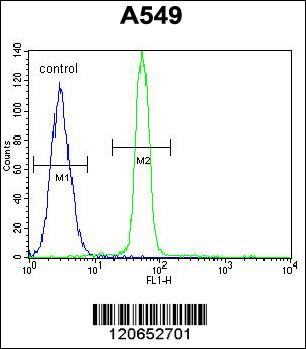 CREB1 antibody - center region (OAAB07952) in A549 cells using Flow Cytometry