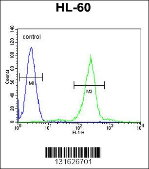 C1QC antibody - center region (OAAB08173) in HL-60 cells using Flow Cytometry