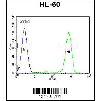 CASP12 antibody - center region (OAAB08271) in HL-60 cells using Flow Cytometry