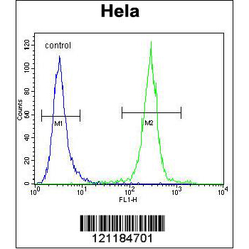 COCH antibody - center region (OAAB09196) in Hela cells using Flow Cytometry