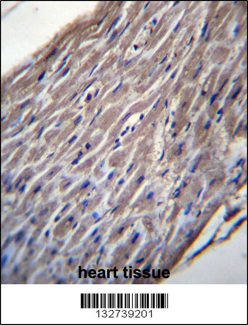 BVES antibody - C - terminal region (OAAB09298) in Human Heart cells using Immunohistochemistry