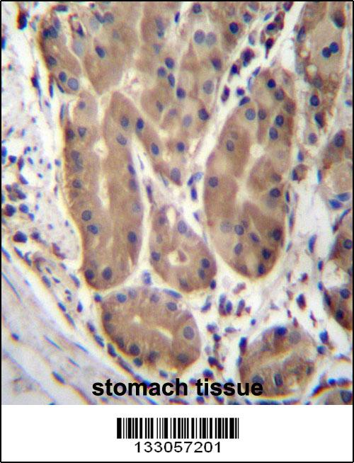 ABHD2 antibody - center region (OAAB09376) in Human Stomach cells using Immunohistochemistry