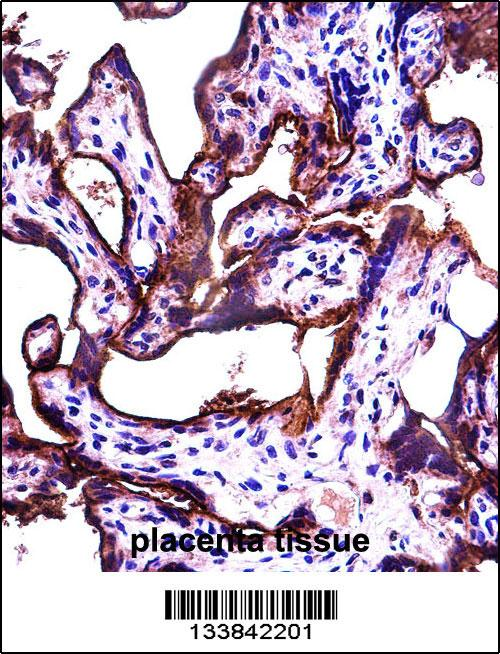 ALPPL2 antibody - N - terminal region (OAAB09853) in Human Placenta cells using Immunohistochemistry