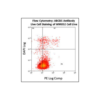 ABCB5 antibody - N - terminal region (OAAB16481) in WM852 cells using Flow Cytometry