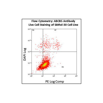 ABCB5 antibody - N - terminal region (OAAB16481) in SkMel-30 cells using Flow Cytometry